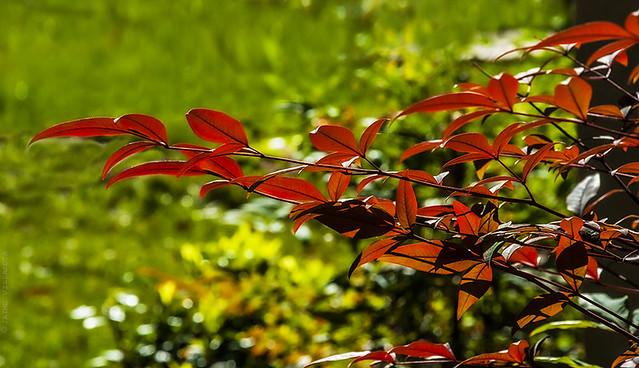 Color natural