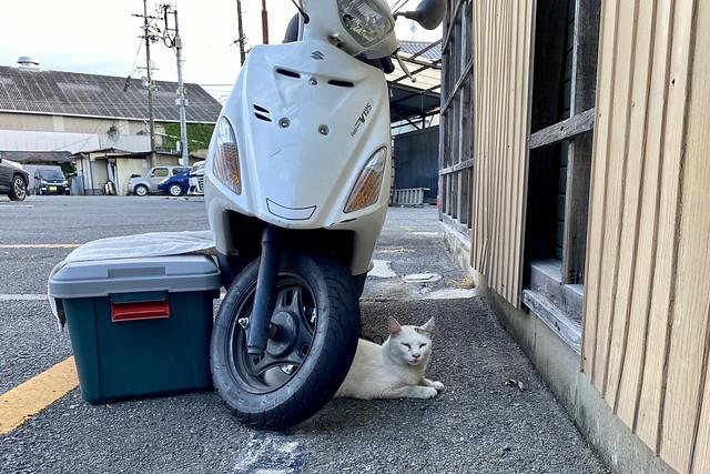Today's Cat@2021−06−17