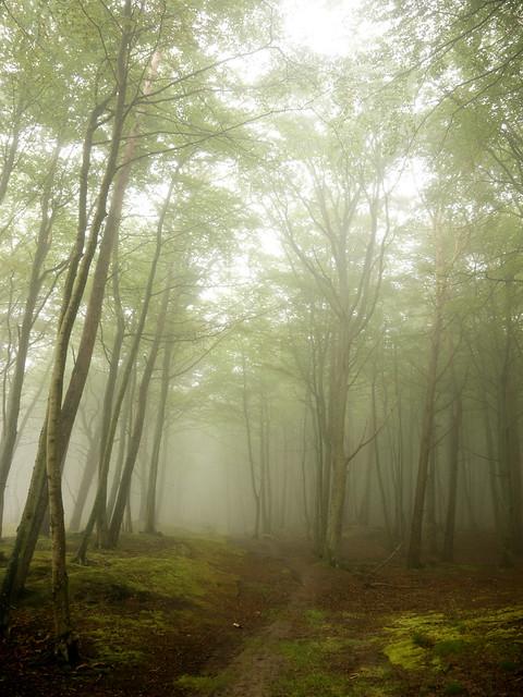 a path in a fog