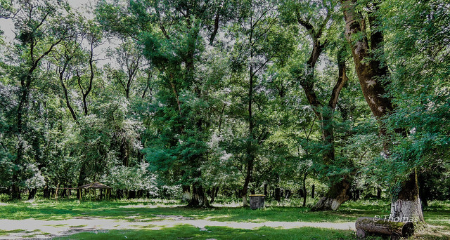 thomas-2606 The forest of Snt Varnavas, Epirus-Greece!