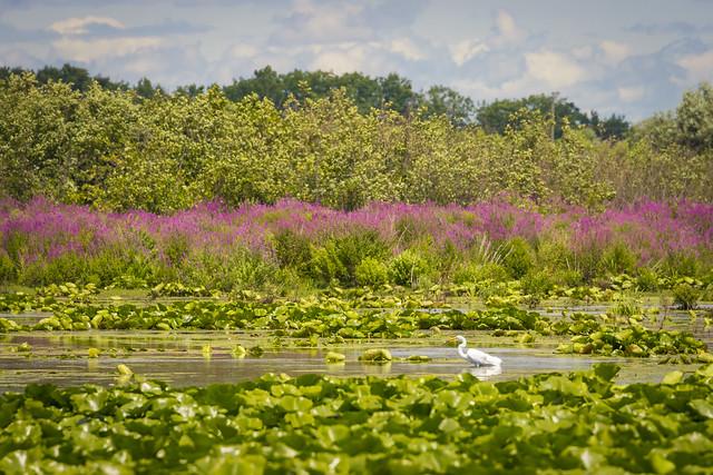 Cranberry Marsh (2020)