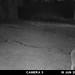 coyote-20210615-100