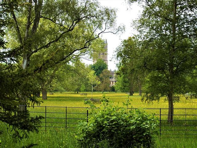 Looking Across the Meadow.