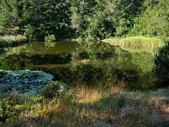 Hackett-Pond-7-19-09.jpg