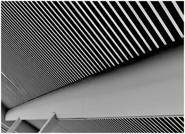 \ \ \  striped  \ \ \
