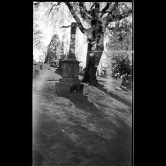 Spirits in the Wild. #pinholephotography #fotografia #pinhole #bnwphotography #pinholetree #pinholephotography #holgamods #kodaktmax100 #cavehillcemetery