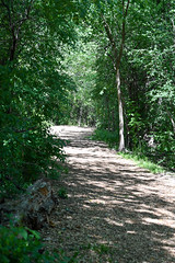 Trail along Ottawa River Parkway