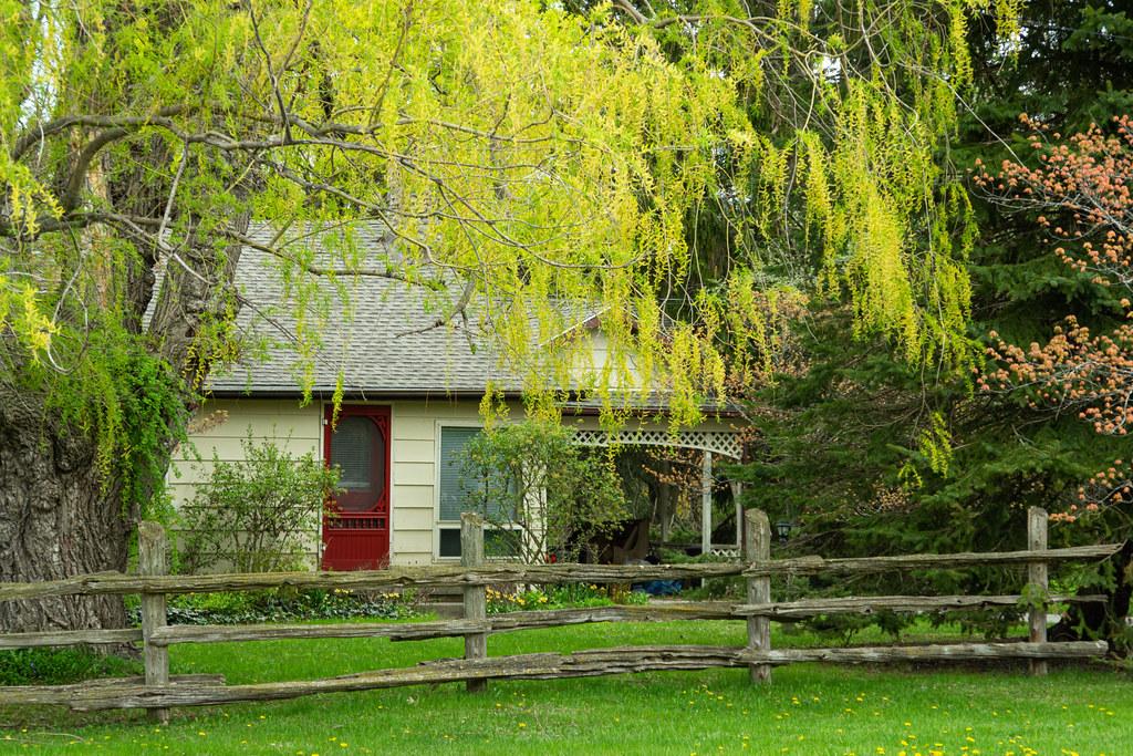spring in Bayfield Nancy Denham(1 of 1).jpg