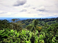 Kilimanjaro Rain Forrest