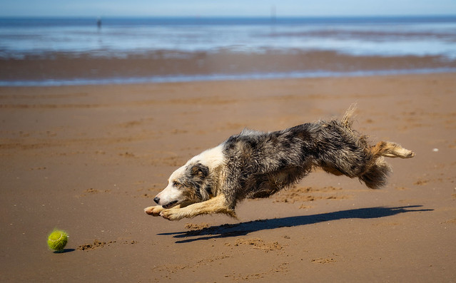Flight of the Collie