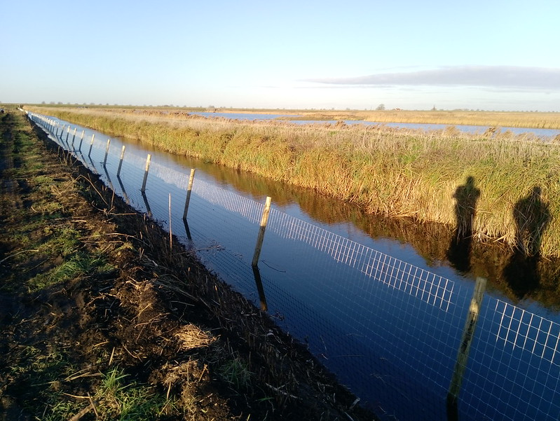 New anti-predator barrier fence on the Low Washes section of the Nene Washes (RSPB)