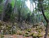 Sur le chemin du Carciara amont (HR22) : les caseddi d'Aragali