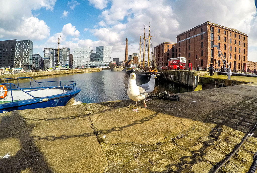 Two Scouse Gulls