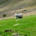"<p><a href=""https://www.flickr.com/people/newnumenor/"">newnumenor</a> posted a photo:</p>  <p><a href=""https://www.flickr.com/photos/newnumenor/51253793481/"" title=""WILD 161""><img src=""https://live.staticflickr.com/65535/51253793481_baea662a5e_m.jpg"" width=""160"" height=""240"" alt=""WILD 161"" /></a></p>"