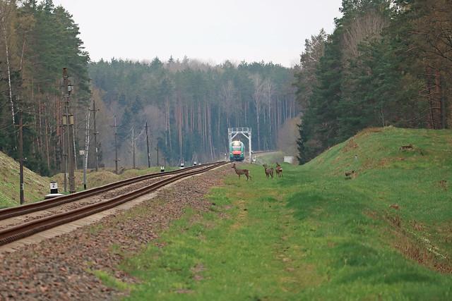 Дизель-поезд ДП6-005 на перегоне Вендриж/Голынец.