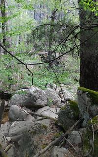 Sur le chemin du Carciara amont (HR22) : entre la confluence Frassiccia et les caseddi