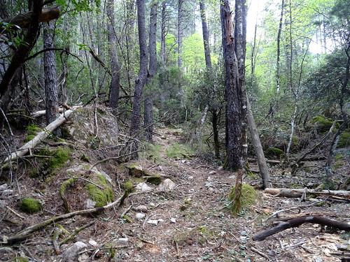 Le chemin du Carciara (HR23) après les caseddi