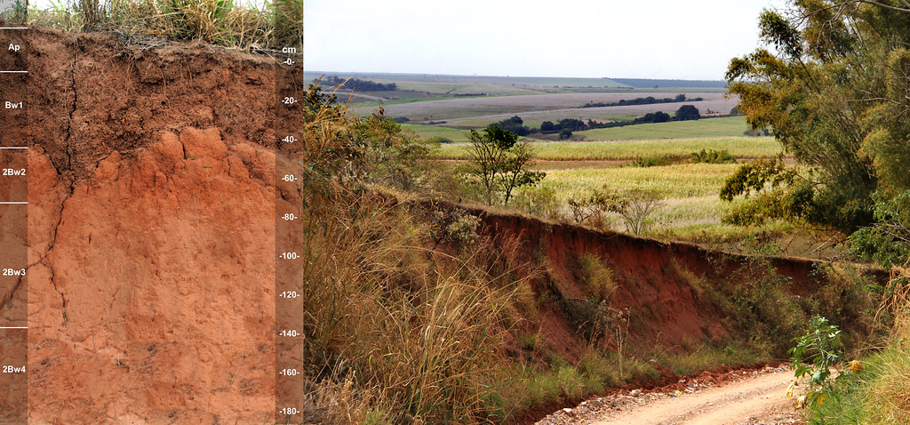Inceptisol (Latossolos) and landscape BRAZIL