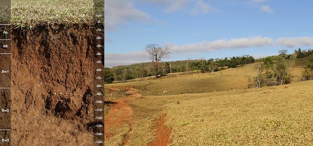 Mollisol (Chernossolos) and landscape BRAZIL