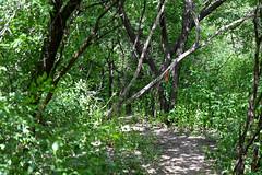 Trail along Ottawa river Parkwa