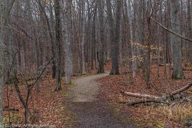 Deer Run Trail #2 - 2020-04-05