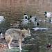 "<p><a href=""https://www.flickr.com/people/ashokbo/"">ashokboghani</a> posted a photo:</p>  <p><a href=""https://www.flickr.com/photos/ashokbo/51254183756/"" title=""Lunch""><img src=""https://live.staticflickr.com/65535/51254183756_63d7f1a851_m.jpg"" width=""240"" height=""180"" alt=""Lunch"" /></a></p>"