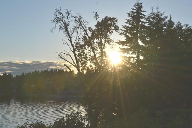 sunset peeking through madrona and pines