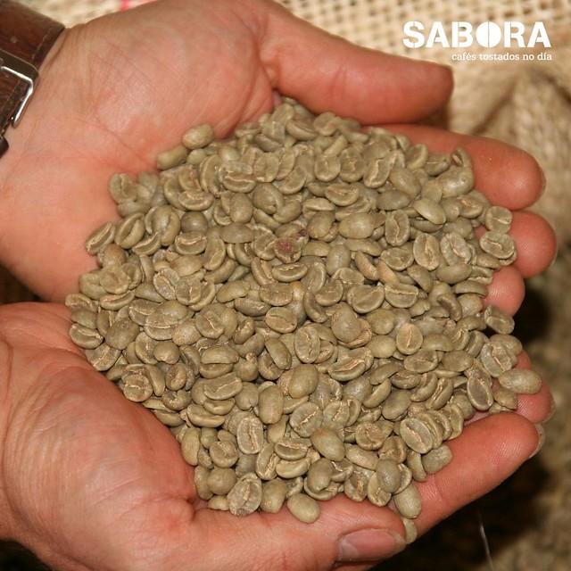 Granos de café arábica en la mano de un tostador