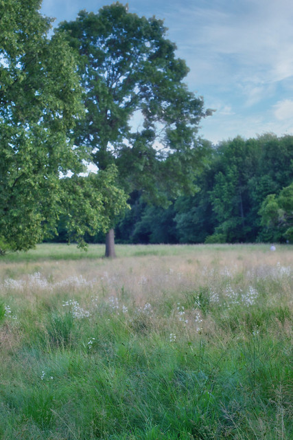 Afternoon Meadow