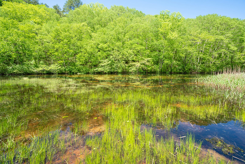 裏磐梯の湿原