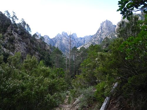 Sur le chemin HR23 : fond de vallée depuis Pta Bunifazinca jusqu'à Pta Cumpuleddu