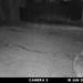 coyote-20210615-102