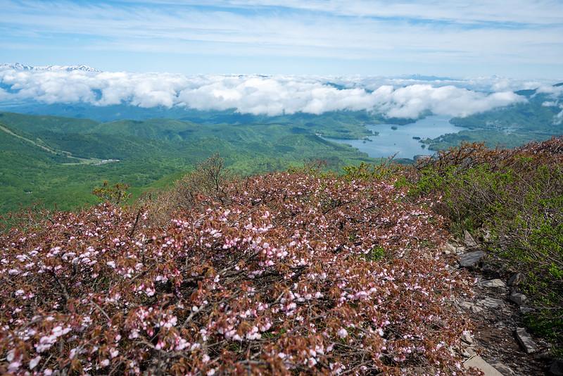 磐梯山の桜