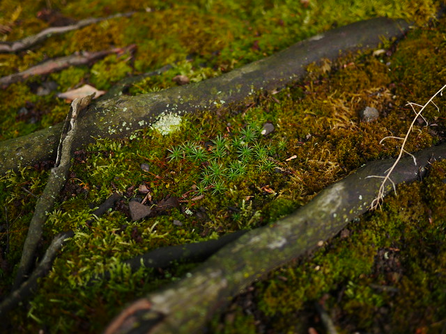 Roots and moss