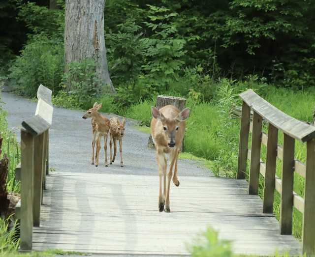 Out for a family morning stroll Tinker Nature Park Henrietta, NY