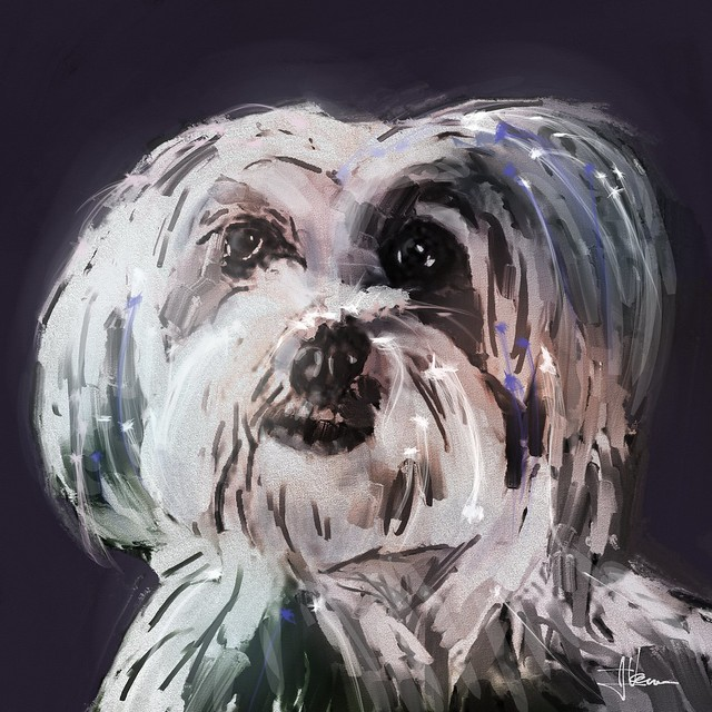 Dog 3B