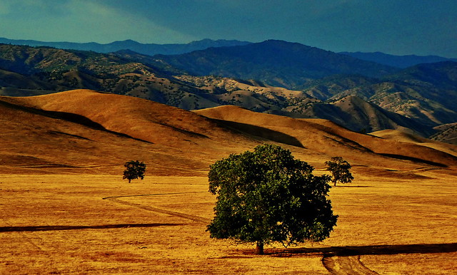 California - Caliente - the drought survivors