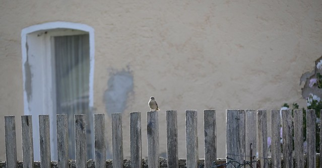 ..hello you: happy fenced friday  :)