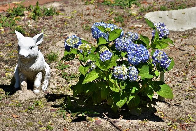 DSC_7472 Jens porcelain Piggy