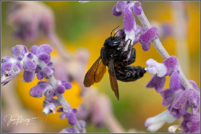 Big Black Bee 8980