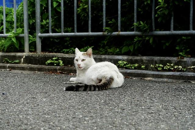 Today's Cat@2021−06−18