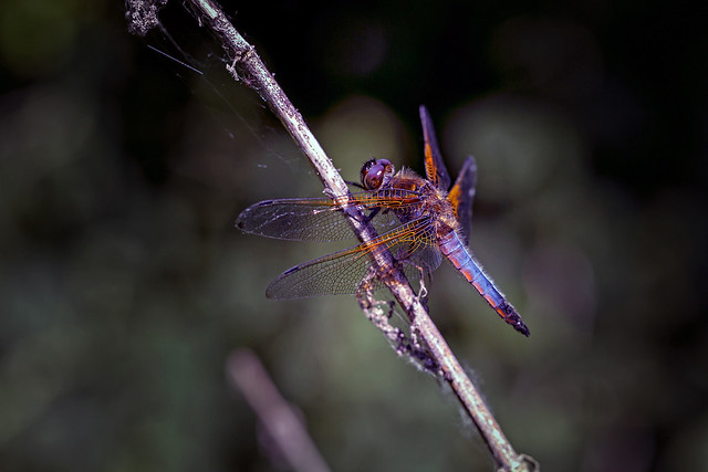 beauty of a dragonfly