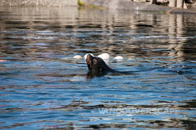Subtidal Adventures Ucluclet-12