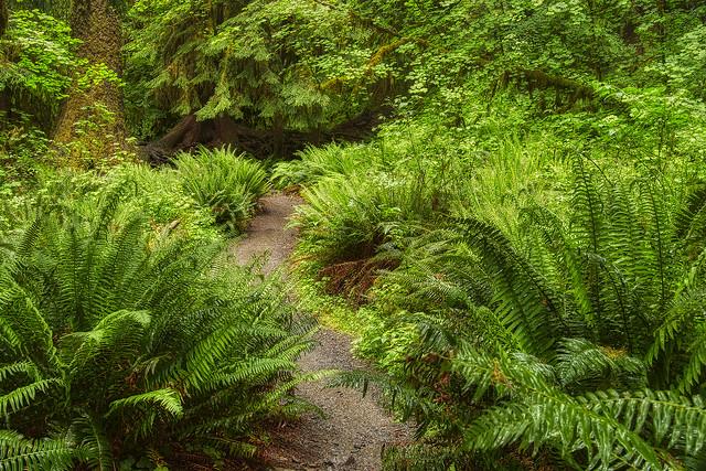 Jungle of Ferns
