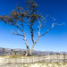 "<p><a href=""https://www.flickr.com/people/evilsparrow/"">Denise Noelle Photography</a> posted a photo:</p>  <p><a href=""https://www.flickr.com/photos/evilsparrow/51255865694/"" title=""Carpinteria CA""><img src=""https://live.staticflickr.com/65535/51255865694_d6f47b9a6a_m.jpg"" width=""240"" height=""181"" alt=""Carpinteria CA"" /></a></p>"