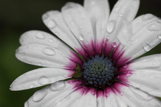 Petals and raindrops