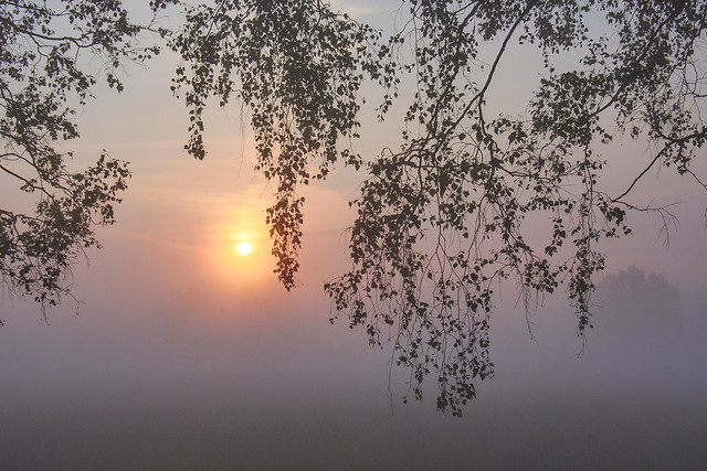 Curtain in the morning mist