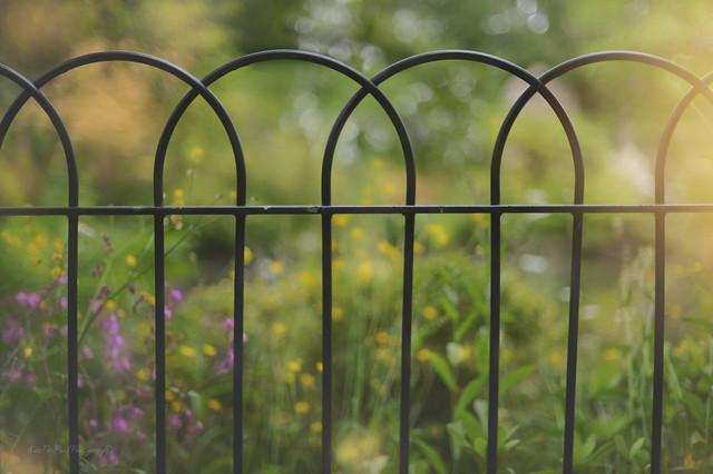 Darwins Fence...  #HFF