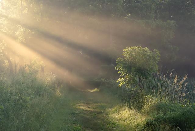 God and a tree