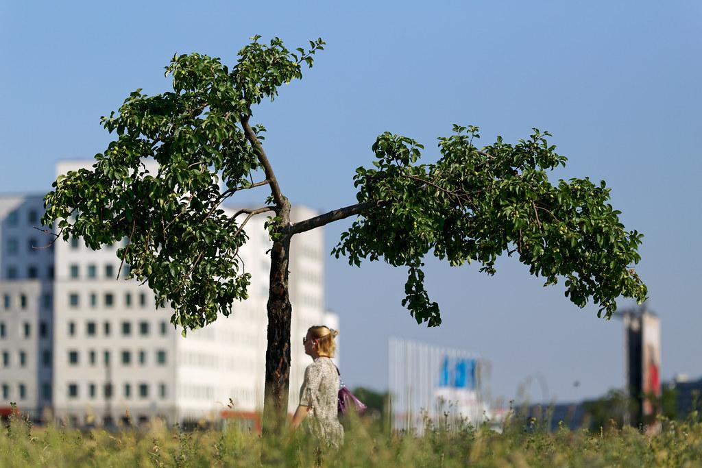 Ein Apfelbaum an einem heißen Tag